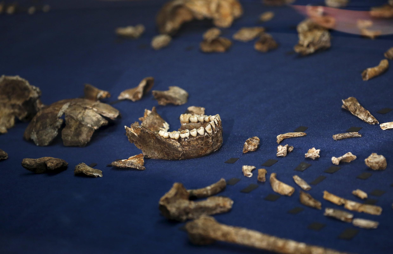 Plus de 1 500 ossements de l'Homo naledi ont été découverts dans une cave quasi inaccessible à une soixantaine de kms de Johannesburg et révélés le 10 septembre 2015.