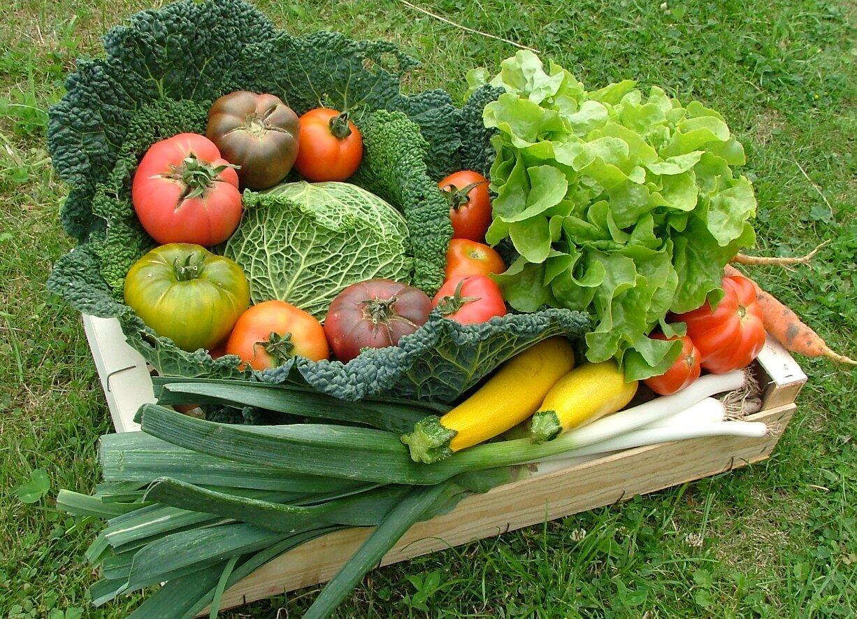 Una canasta de verduras compradas directamente en la granja.