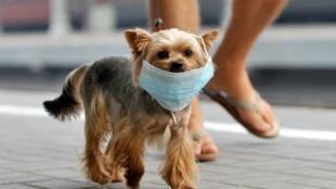 Uso de máscaras por cães é medida extrema contra a poluição nas cidades.