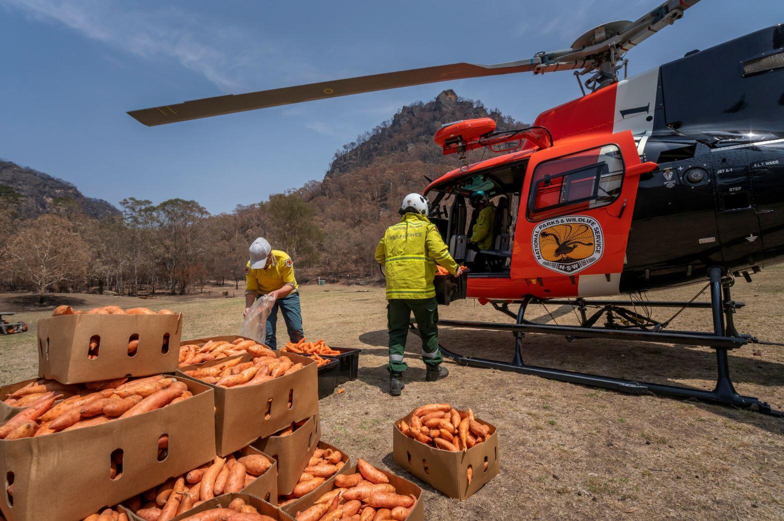 Тонны моркови и сладкого картофеля сбросили животным в Австралии