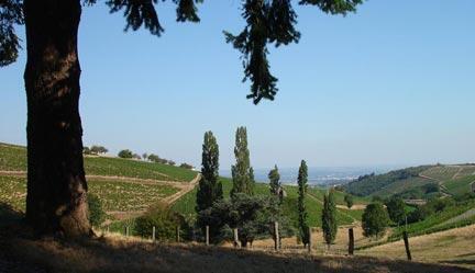 Vue sur des vignes de Chiroubles (Beaujolais).
