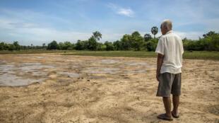 Un campesino camboyano frente a su campo desolado.