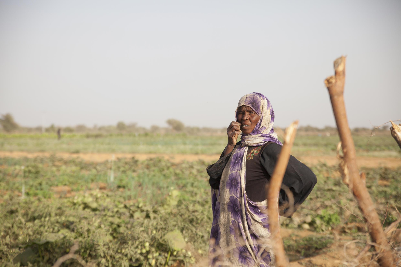 Femme au champ en Mauritanie (illustration)