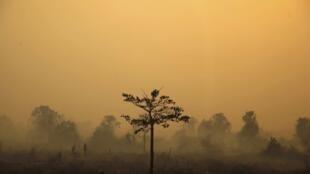 A floresta da Ilha de Sumatra abriga tigres de uma espécie em extinção
