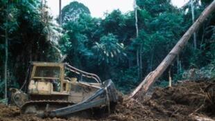 Déforestation au Gabon.
