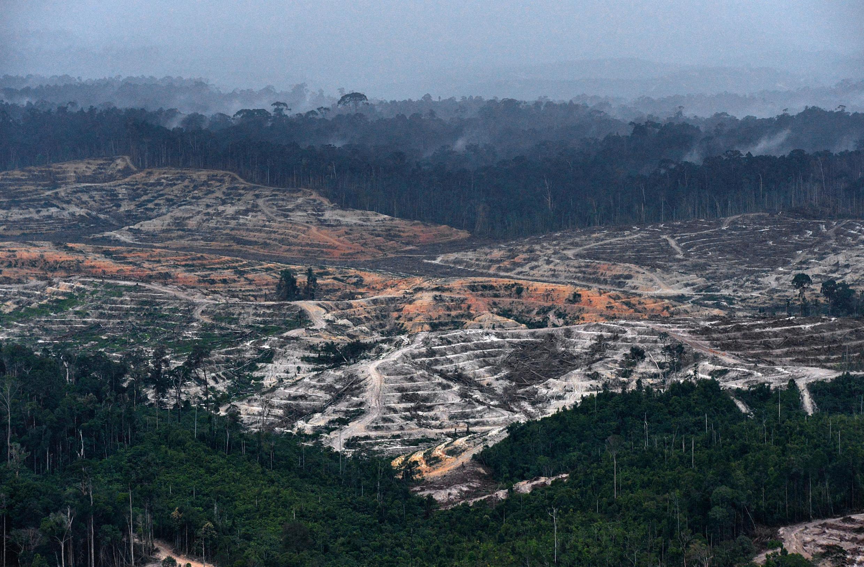Image d'archive: Vue aérienne prise le 24 février 2014 montrant la déforestation dans la province centrale de Kalimantan, sur la partie indonésienne de l'île de Bornéo.