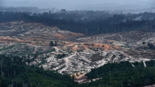 Vue aérienne prise le 24 février 2014 montrant la déforestation dans la province centrale de Kalimantan, sur la partie indonésienne de l'île de Bornéo.