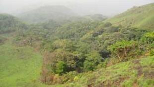 Floresta na Guiné Bissau.