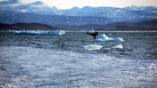 Trong tương lai không xa Bắc cực quanh năm băng giá sẽ trở thành tuyến đường hàng hải tấp nập.