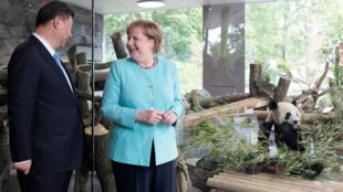 Ảnh minh họa : Thủ tướng Đức Angela Merkel và chủ tịch Trung Quốc Tập Cận Bình dự buổi lễ đón 2 gấu trúc tại sở thú Berlin, ngày J5/07/2017.