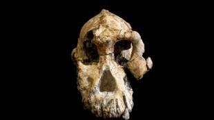 O crânio do australopiteco foi descoberto na Etiópia em 2016 e revelado nesta quarta-feira, 28 de agosto de 2019, em artigos puclicados na Nature.