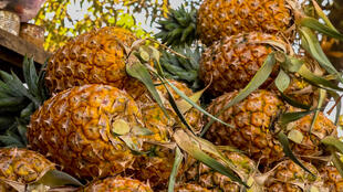 Guinée - Ananas - ananas photo 10