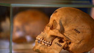 the skulls of Herero and Nama people in Berlin during a ceremony that gave them back to the Namibian government, 29 August 2018.