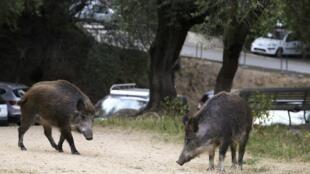 En Algérie, la chasse a de nouveau été autorisée, après 25 ans d'interdiction. (Photo d'illustration)