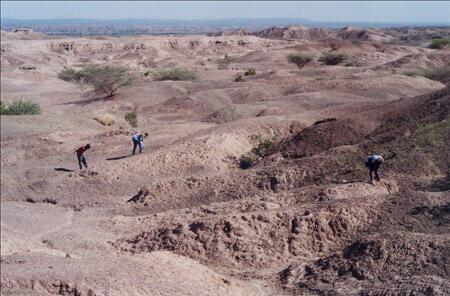 L'équipe qui a découvert l'hominidé ardipithecus ramidus, plus vieux que Lucy, dans l'Afar, en Ethiopie, en décembre 2003 (ici en prospection).