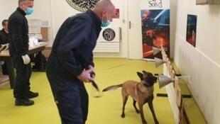Cães identificam pacientes contaminados pelo SARS-Cov-2  na Faculdade de Veterinária de Maison Alfort