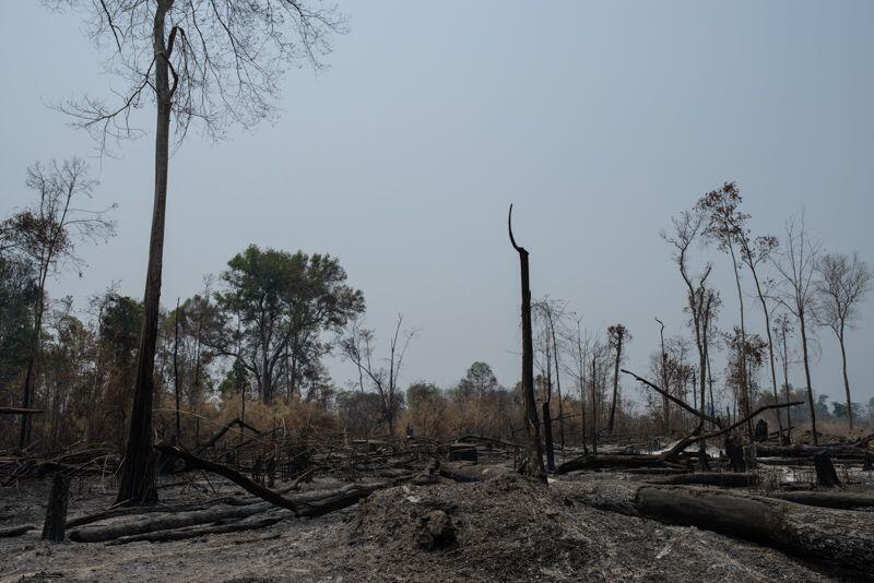 Tình trạng phá rừng vẫn không ngừng gia tăng trên thế giới.
