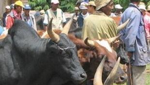 Sur le marché de Ambatolampy à Madagascar.