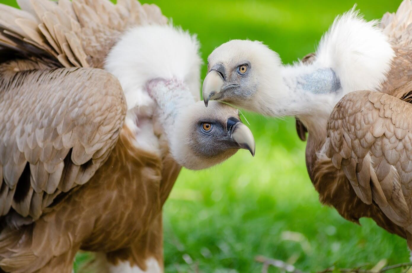 Um estudo do pesquisador Bruce Bagemihl registrou homossexualidade em cerca de 1.500 espécies animais.