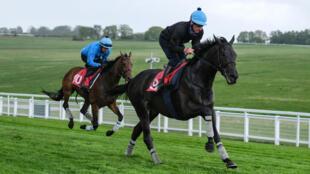 Ed Dunlop's Derby hopeful John Leeper exercising on the Epsom Downs last month