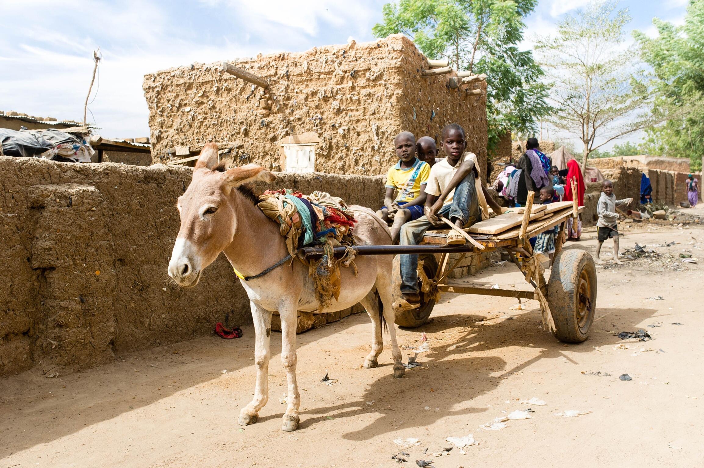 Au marché de Niamey, les asins ne font plus partie du bétail.