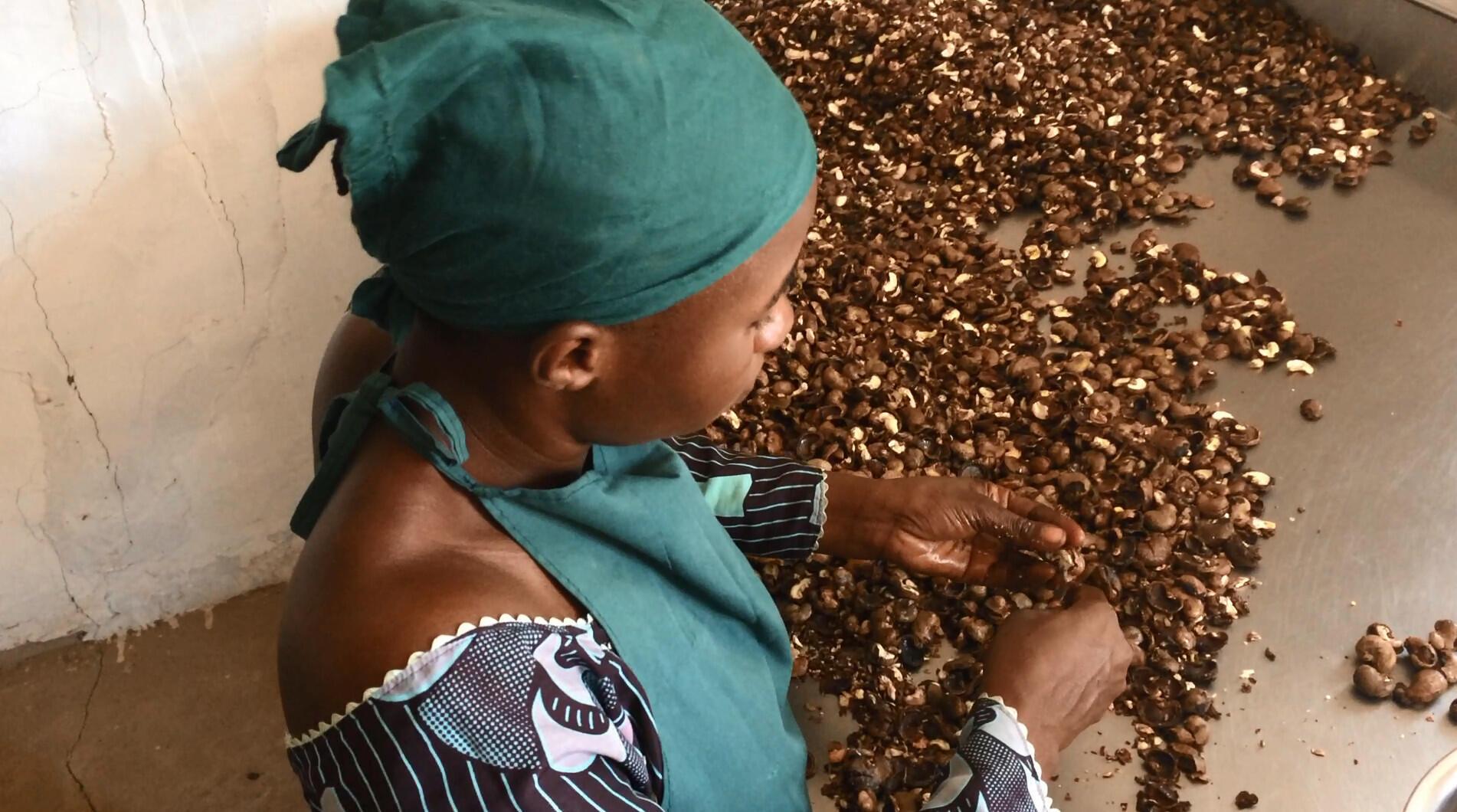Peeling cashews by hand.
