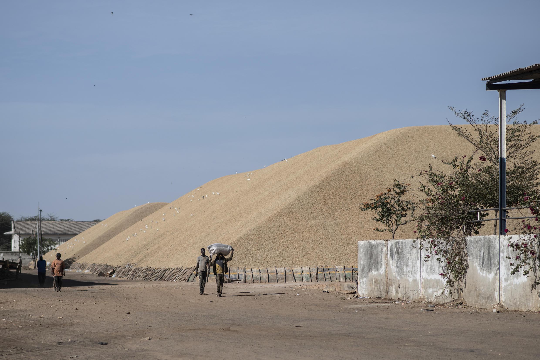 Lundi 4 février 2019. Copeol, usine d'huile d'arachide à Kaolack, ville carrefour point de passage pour les camions qui vont aussi vers le Mali, ville considérée comme la capitale de l'arachide.