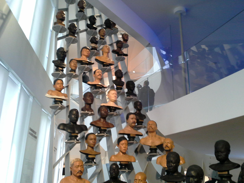 Estructura de bustos de América, Asia y Africa, en el Museo del Hombre de París.