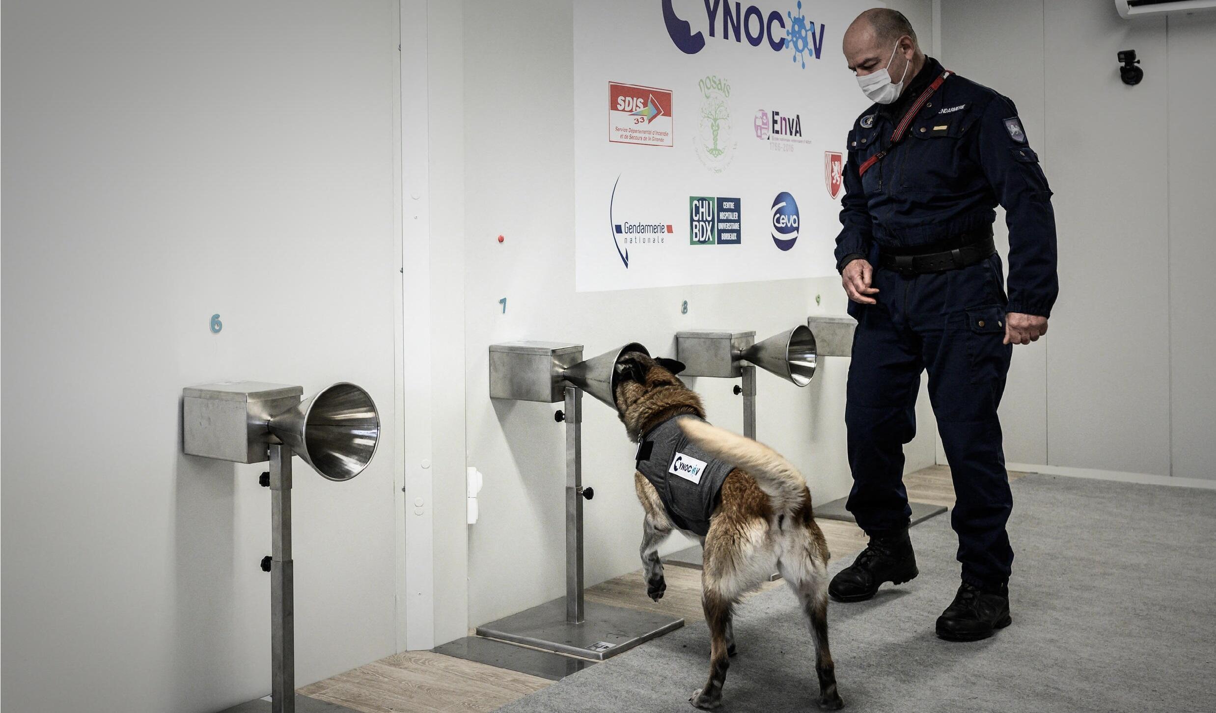 2021-02-18 france coronavirus covid-19 sniffer detector dogs