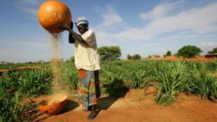 Les pluies sont parfois ravageuses dans certaines régions du Niger. Les cultures et les cultivateurs en pâtissent.