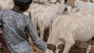 Un agriculteur Fulani au Nigeria.