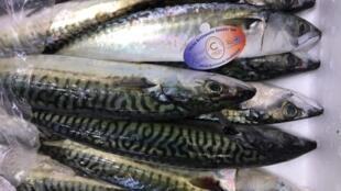 Du poisson frais en transit sur le marché de Rungis.