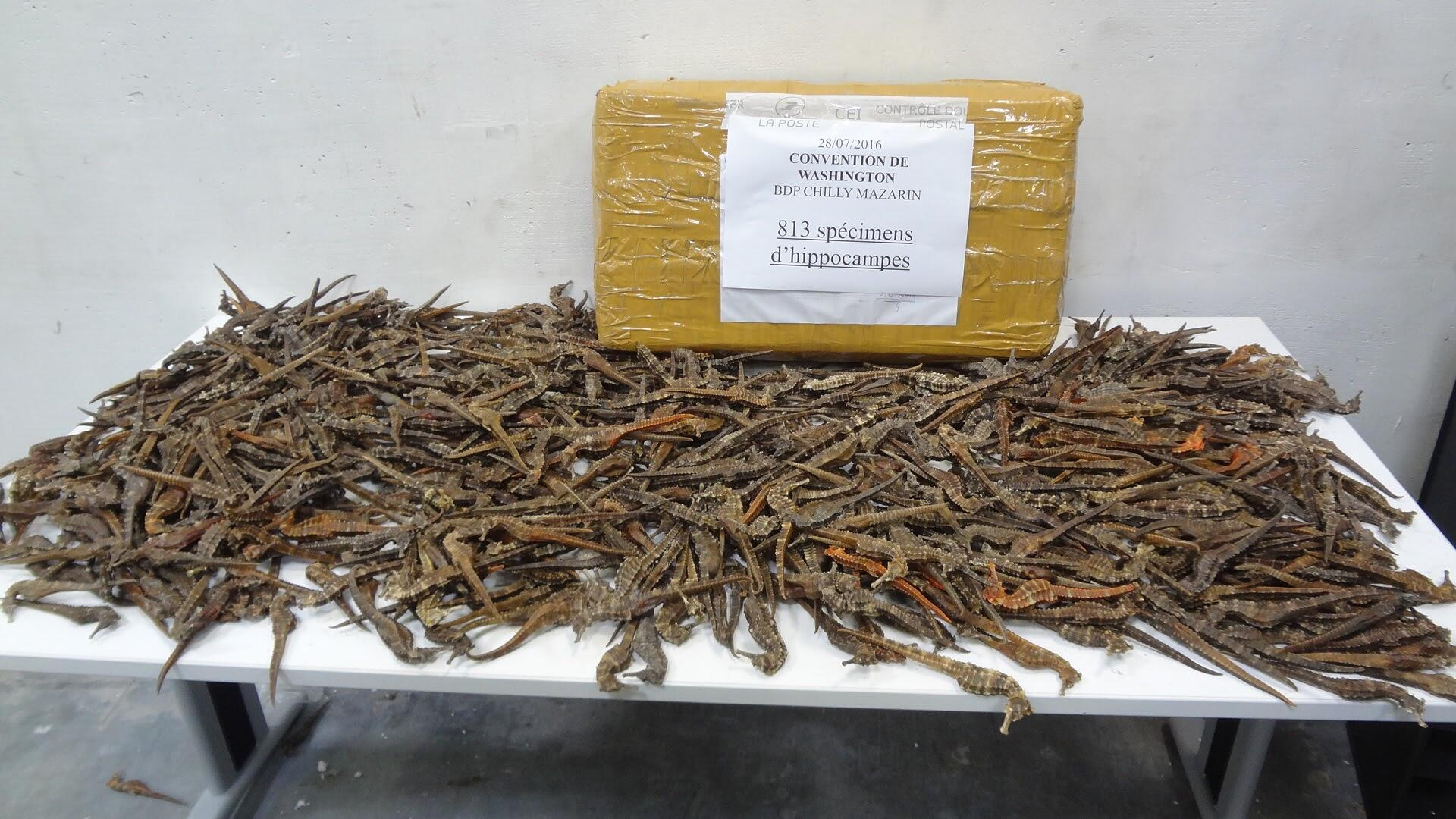 This handout picture shows a part of the dead seahorses seized by the French police in Chilly-Mazarin.