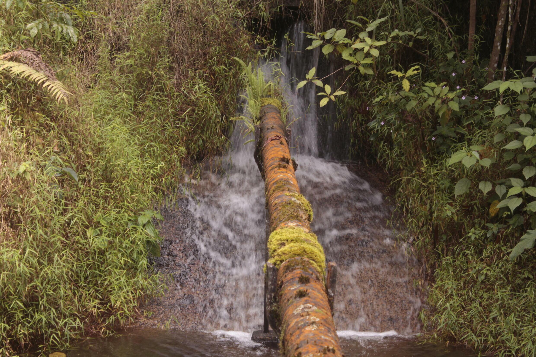 Municipal_water_source_Buea