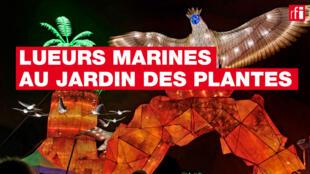 «Océans en voie d'illumination» propose aux visiteurs, dans un parcours nocturne, de découvrir les créatures des océans.
