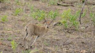 Seca no parque Kruger, na África do Sul.