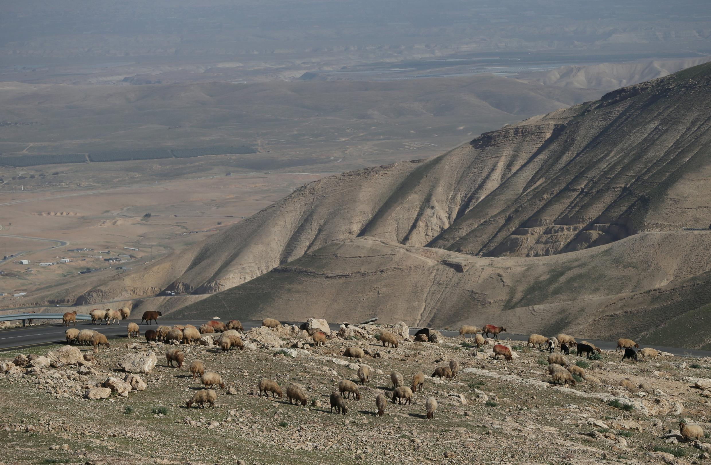 La vallée du Jourdain près de Jéricho, en Cisjordanie, où Israël a annoncé son intention d'annexer 150 hectares de terres agricoles, le 20 janvier 2016.