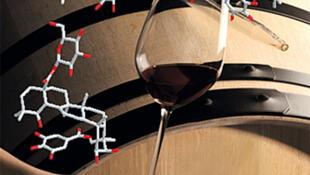 Représentation moléculaire des Quercotriterpénosides, nouvelle famille de composés édulcorants libérés par le bois de chêne.