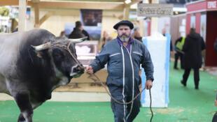 Nicolas Lassalle, proprietário duma vaca de mil e quatrocentos kg ! (imagem de ilustração)