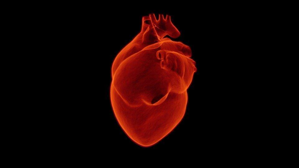 Les maladies cardiovasculaires: première cause de mortalité au monde.