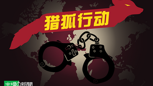 中國網絡關於獵狐行動報道圖片