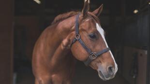 La plupart des propriétaires de chevaux n'ont pas de moyens de surveillance et peu de moyens de protection face à ces attaques.