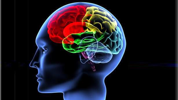 La mémoire est une fonction essentielle de notre cerveau.