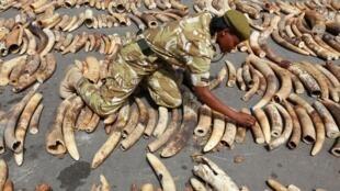 Hauren Giwaye da aka kama a kasar Kenya