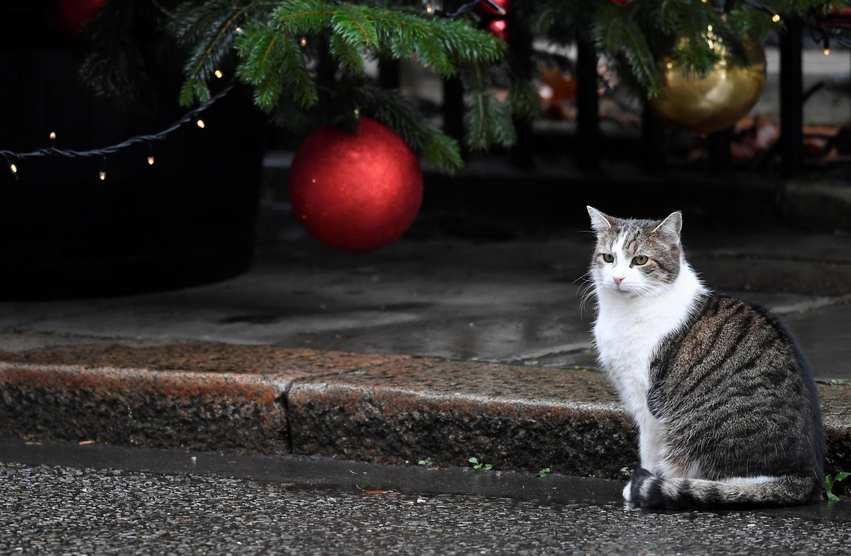 Каждый год французская ассоциация SPA устраивает акцию «Рождество для животных»