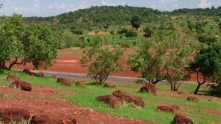 Forêt de la région de Kayes.