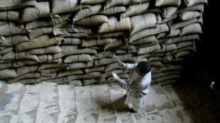 Nhân viên kiểm tra chất lượng gạo trong kho dự trữ của chính phủ tại Srinagar, Ấn Độ. Ảnh chụp ngày 03/05/2008.