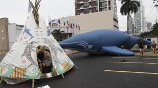 Các hiệp hội bảo vệ cá voi biểu tình trước hội nghị của Ủy ban Cá voi Quốc tế tại Panama năm 2012.