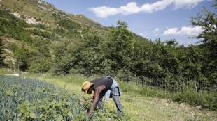 Pierre Koffi-Alanda au travail sur l'une de ses parcelles.