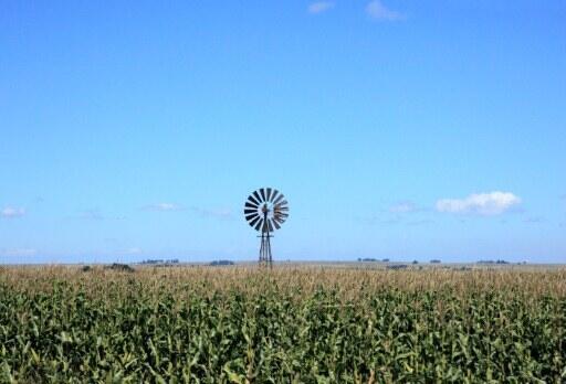 Vue sur un champs de maïs en Afrique du Sud (septembre 2012).